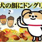 韓国語のことわざ「개 밥에 도토리(犬の餌にドングリ)」の意味は?